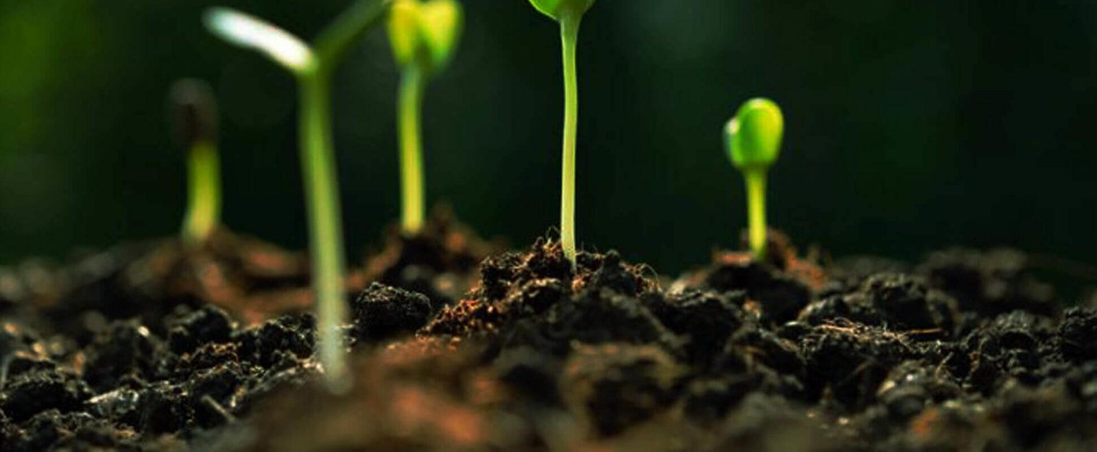 Testiranje pH tla